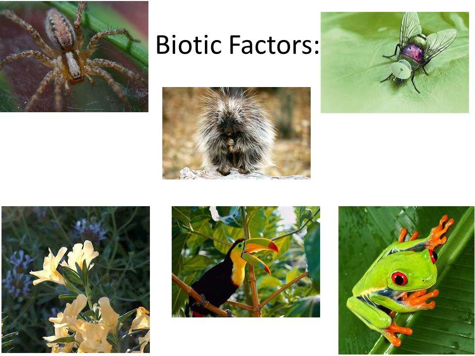 Biotic Factors:
