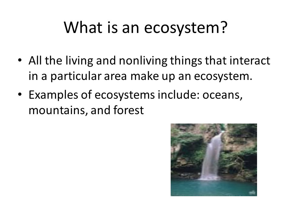 What is an ecosystem All the living and nonliving things that interact in a particular area make up an ecosystem.