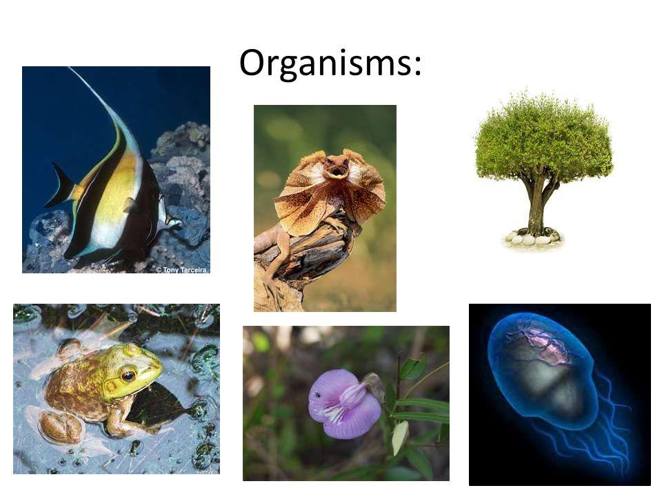 Organisms: