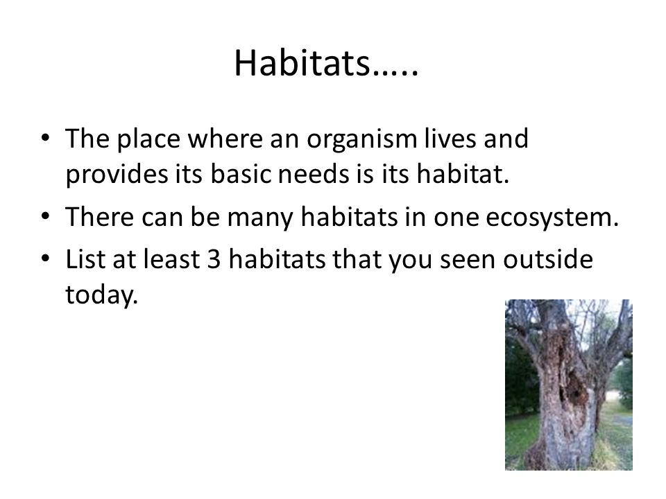 Habitats….. The place where an organism lives and provides its basic needs is its habitat. There can be many habitats in one ecosystem.