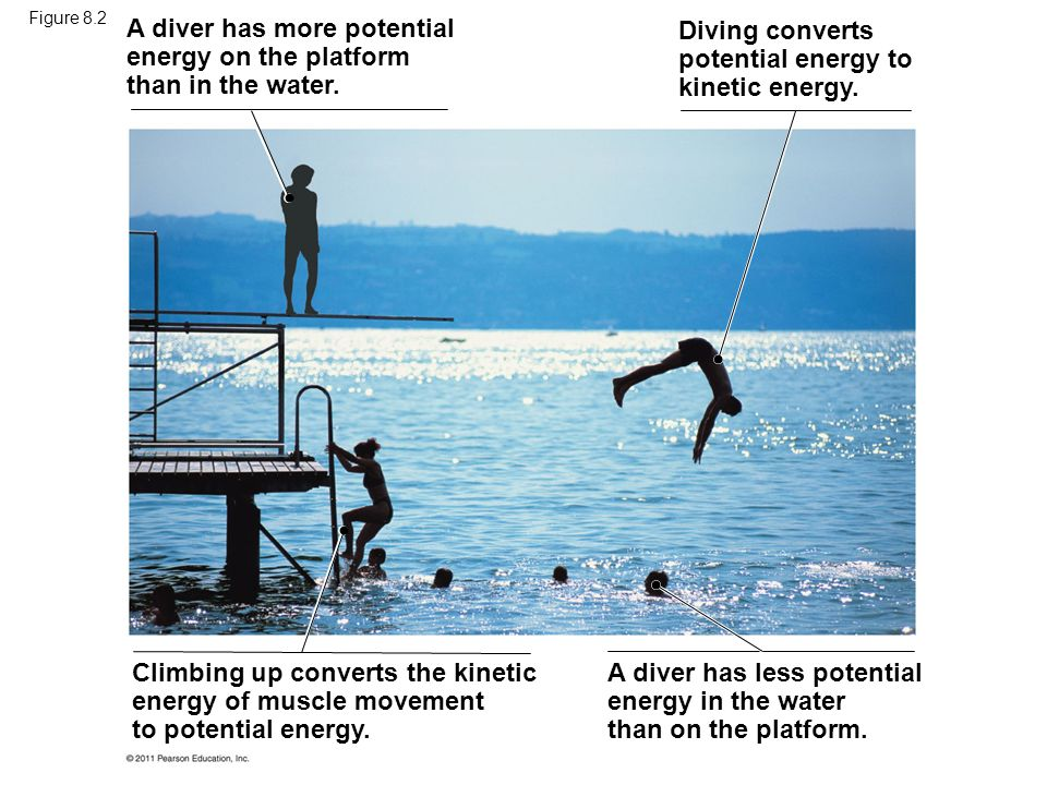 A diver has more potential energy on the platform than in the water.