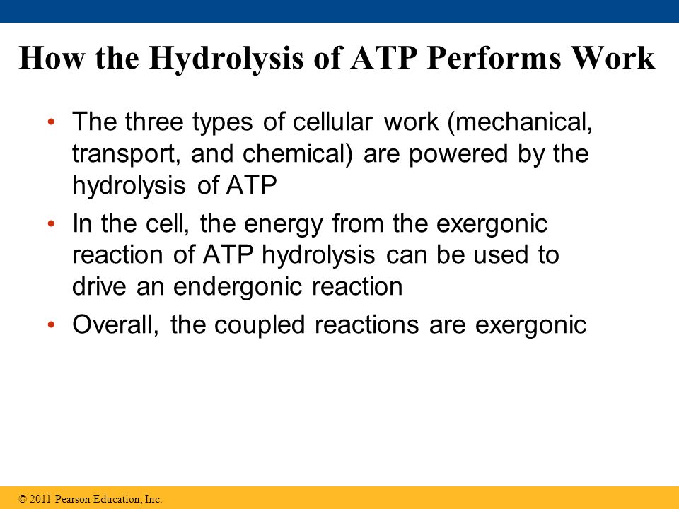How the Hydrolysis of ATP Performs Work