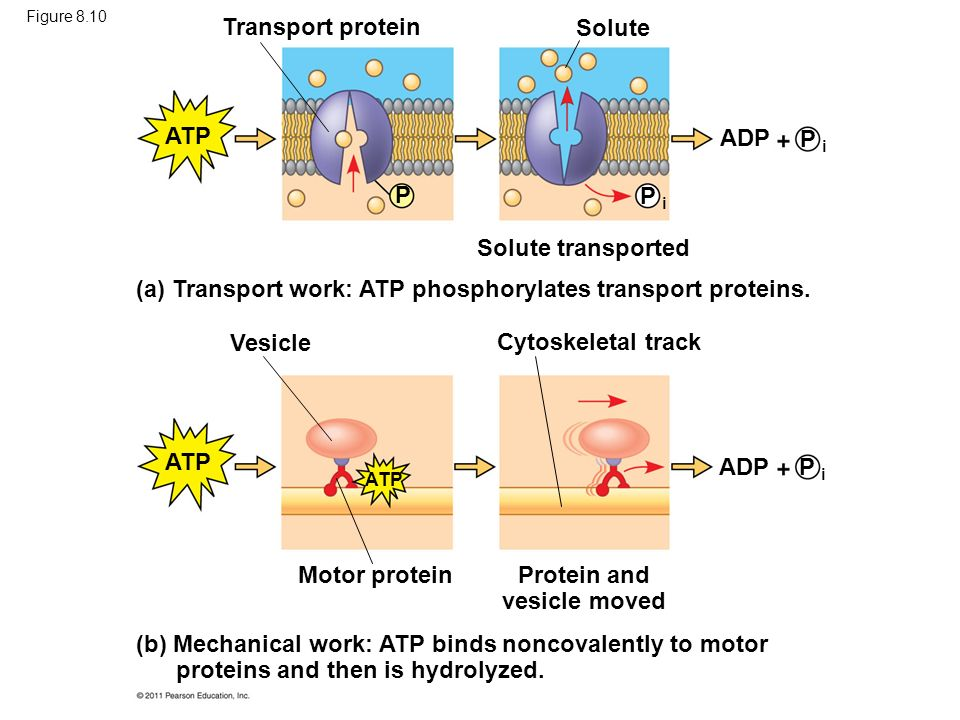 Protein and vesicle moved