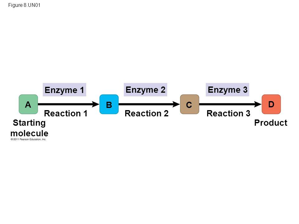 Enzyme 1 Enzyme 2 Enzyme 3 A B C D Reaction 1 Reaction 2 Reaction 3