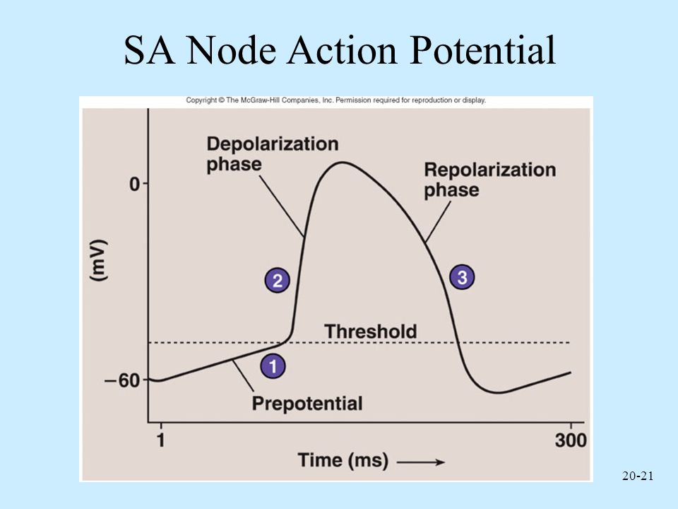 SA Node Action Potential