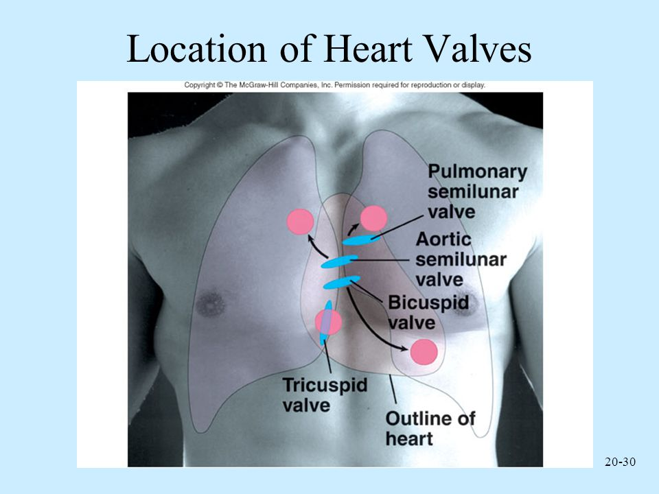Location of Heart Valves