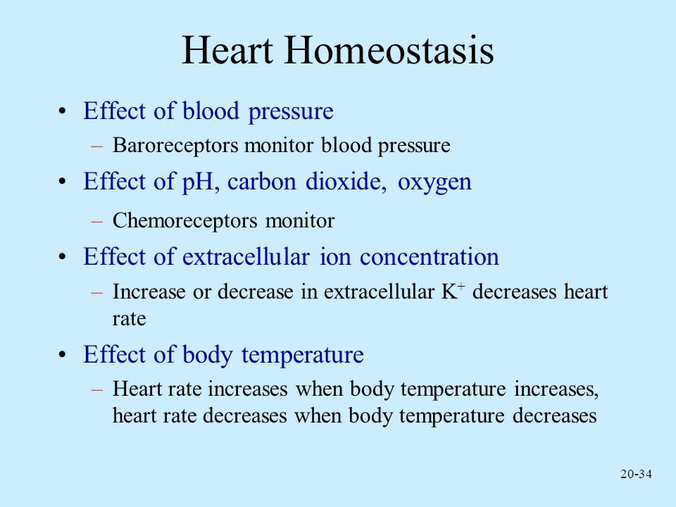 Heart Homeostasis Effect of blood pressure