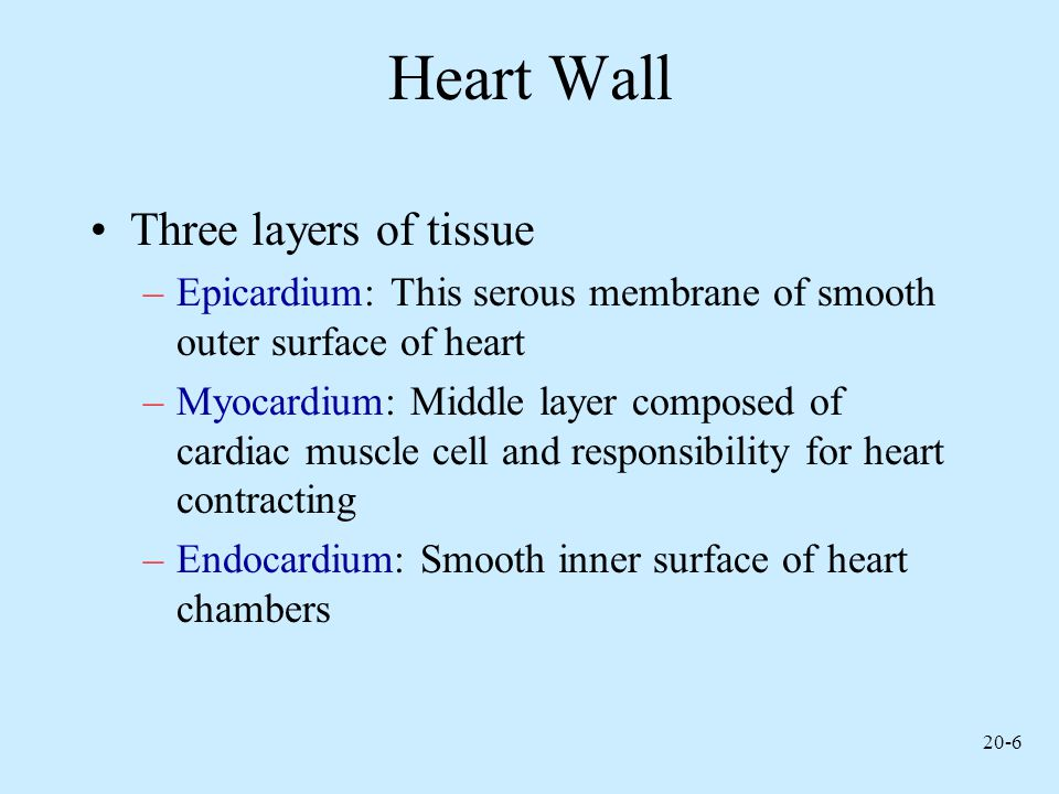 Heart Wall Three layers of tissue