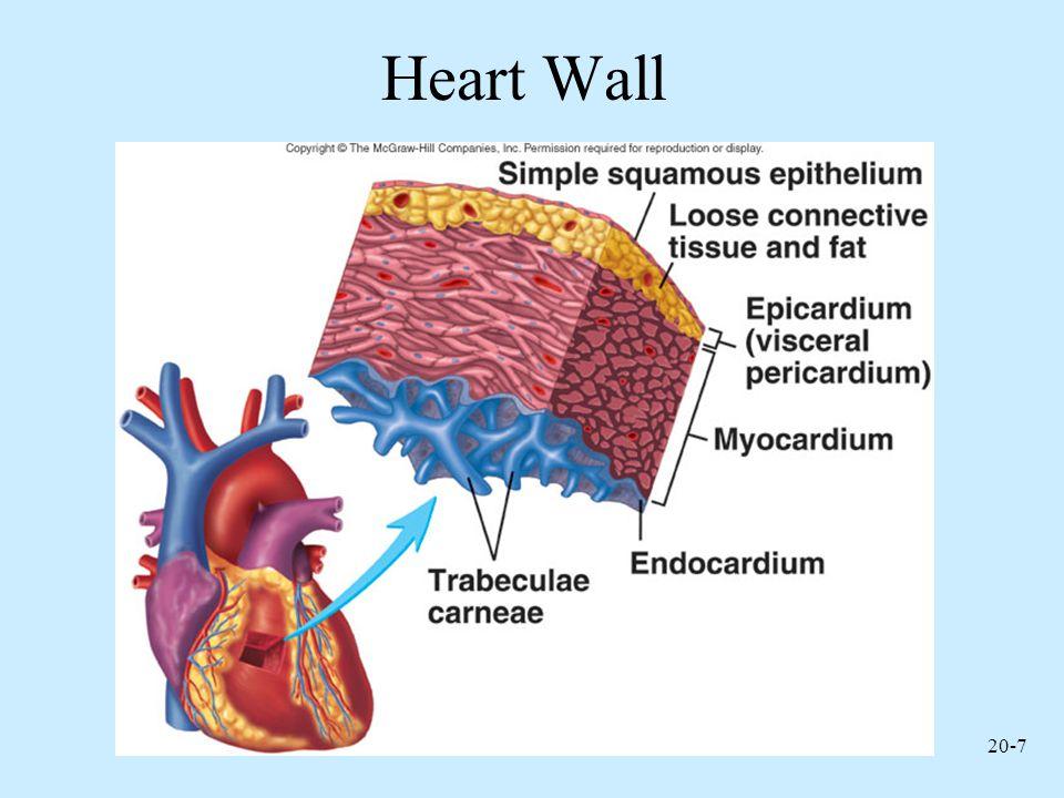 Heart Wall