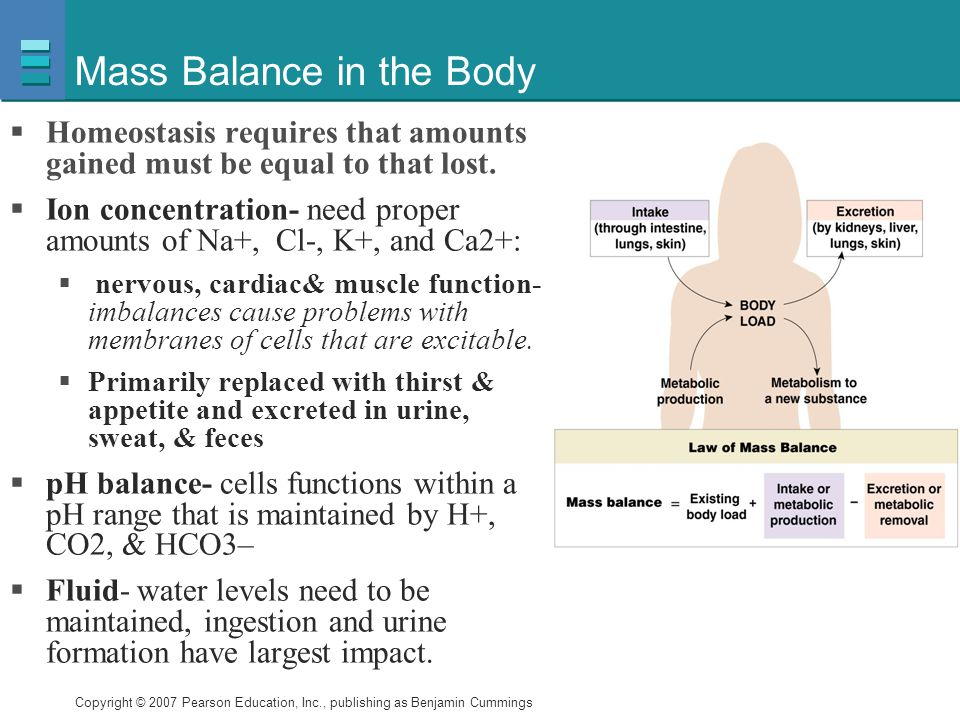 Mass Balance in the Body