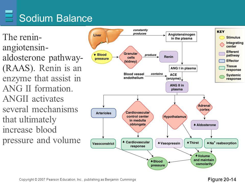 Sodium Balance