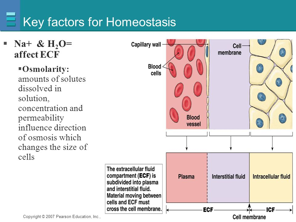 Key factors for Homeostasis