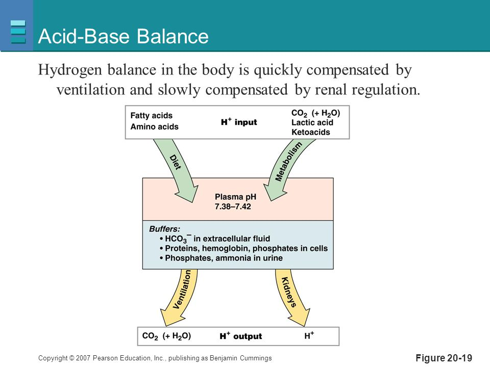 Acid-Base Balance Hydrogen balance in the body is quickly compensated by ventilation and slowly compensated by renal regulation.