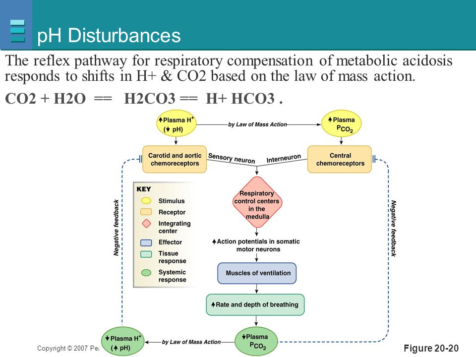 pH Disturbances The reflex pathway for respiratory compensation of metabolic acidosis responds to shifts in H+ & CO2 based on the law of mass action.