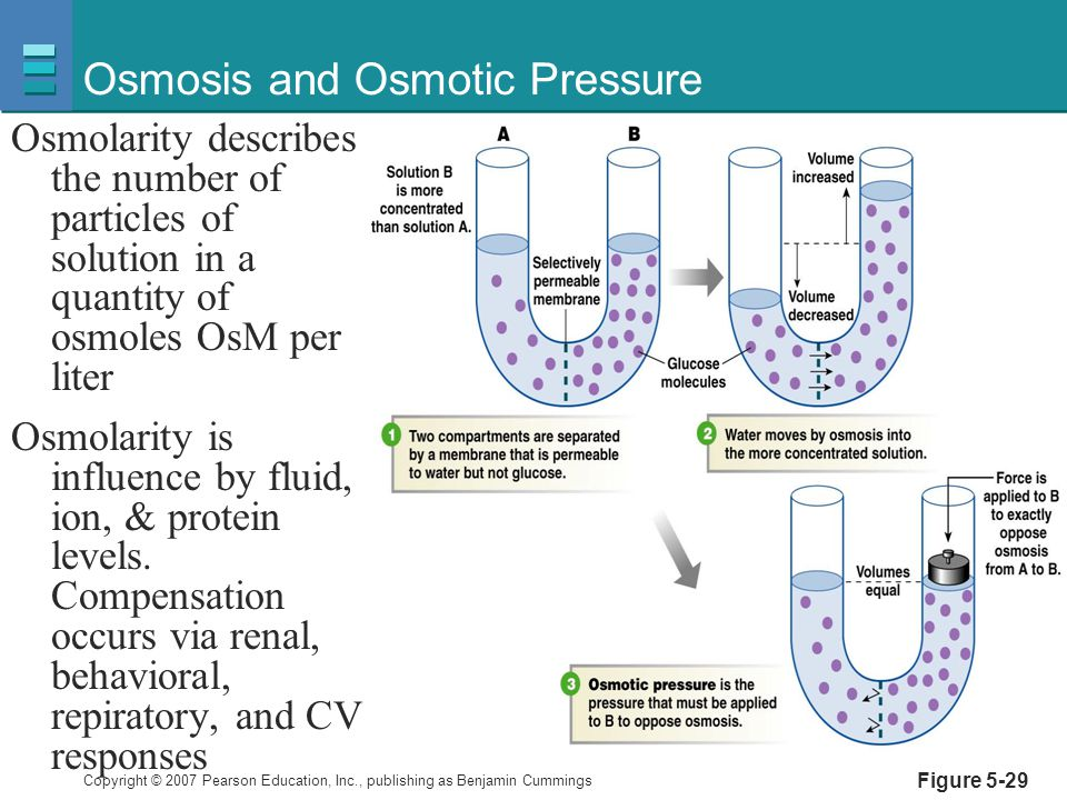 Osmosis and Osmotic Pressure