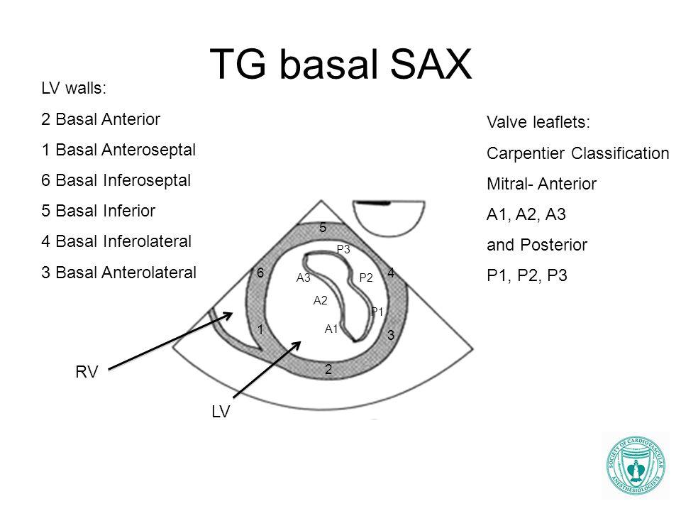 TG basal SAX LV walls: 2 Basal Anterior 1 Basal Anteroseptal