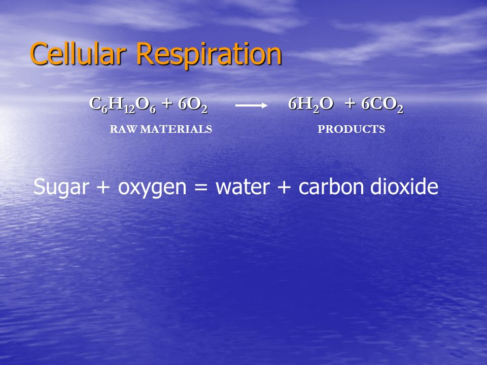 Cellular Respiration Sugar + oxygen = water + carbon dioxide