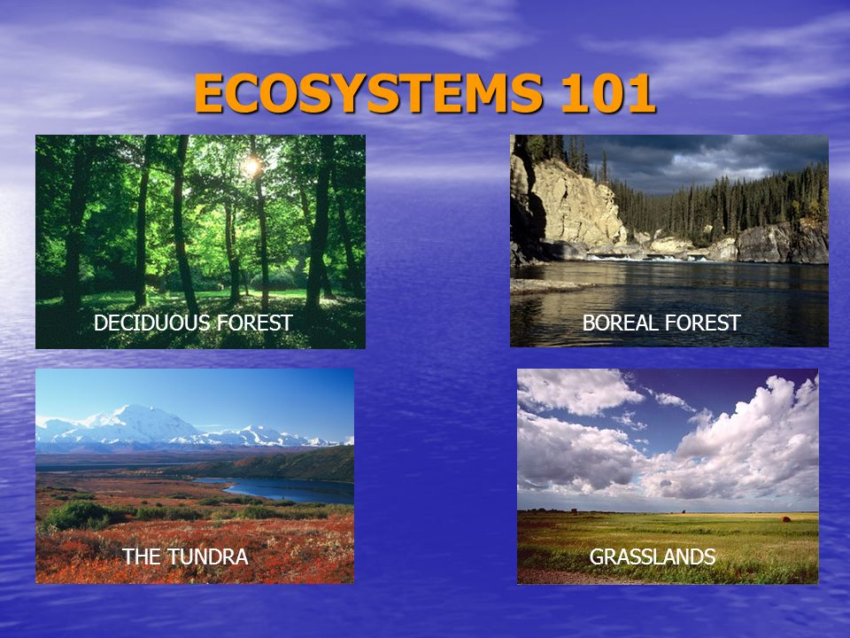 ECOSYSTEMS 101 DECIDUOUS FOREST BOREAL FOREST THE TUNDRA GRASSLANDS