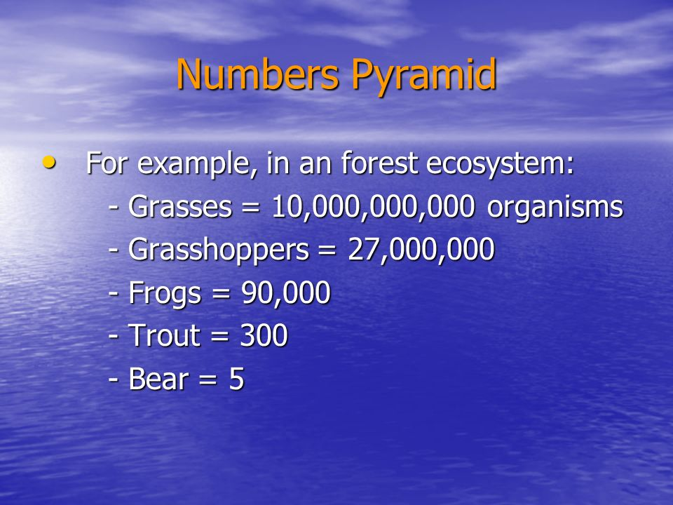 Numbers Pyramid For example, in an forest ecosystem: