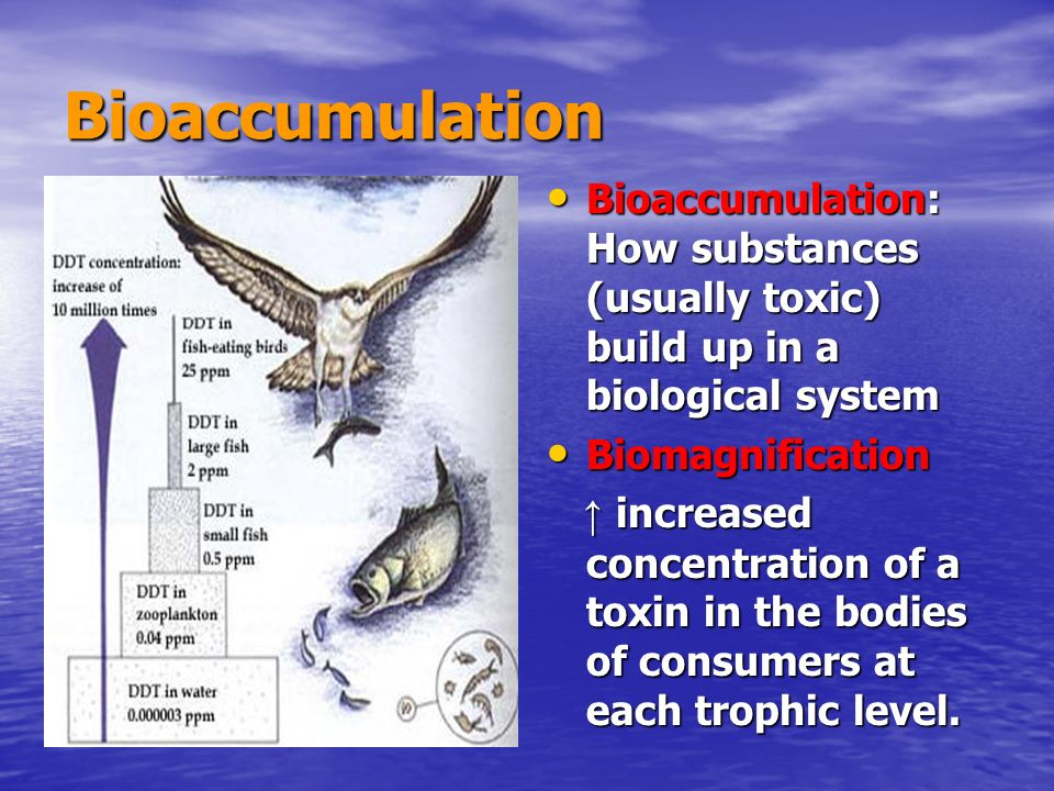Bioaccumulation Bioaccumulation: How substances (usually toxic) build up in a biological system. Biomagnification.