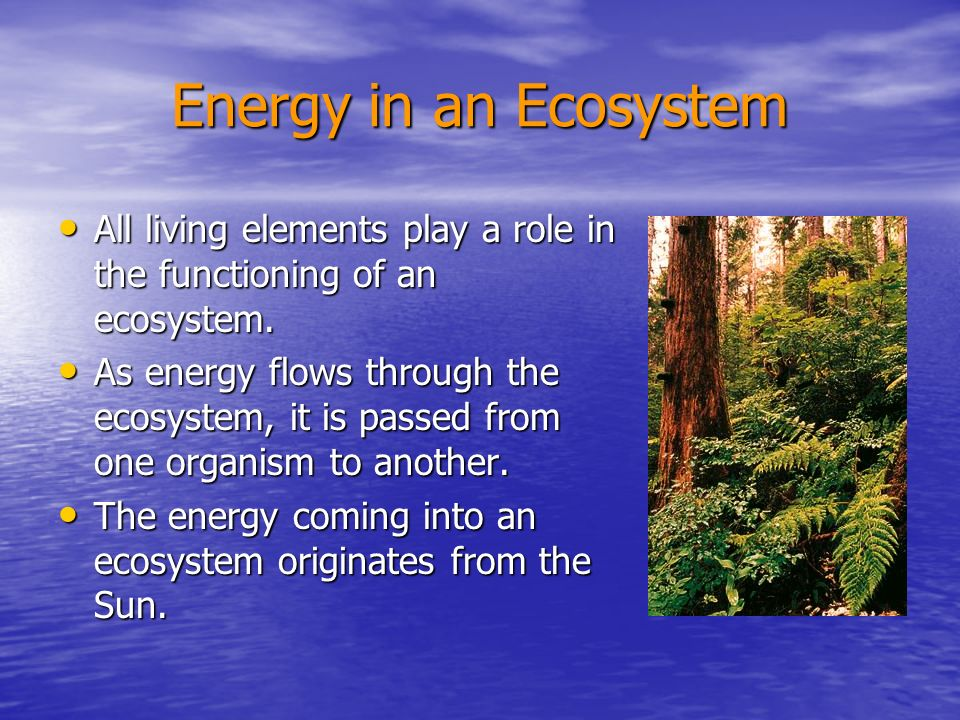 Energy in an Ecosystem All living elements play a role in the functioning of an ecosystem.
