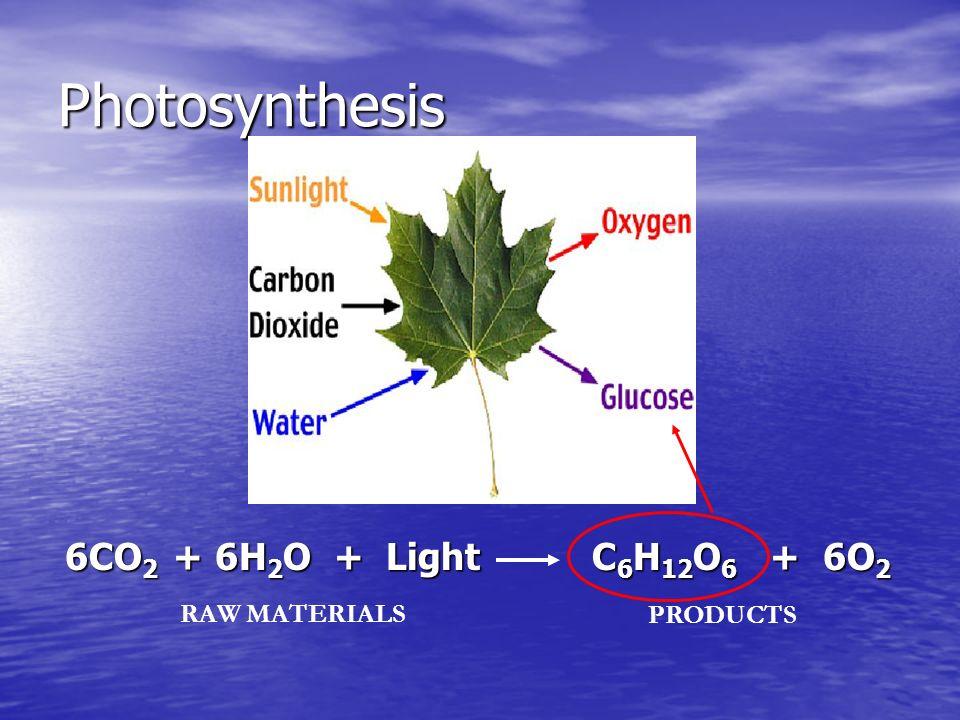 Photosynthesis 6CO2 + 6H2O + Light C6H12O6 + 6O2 RAW MATERIALS