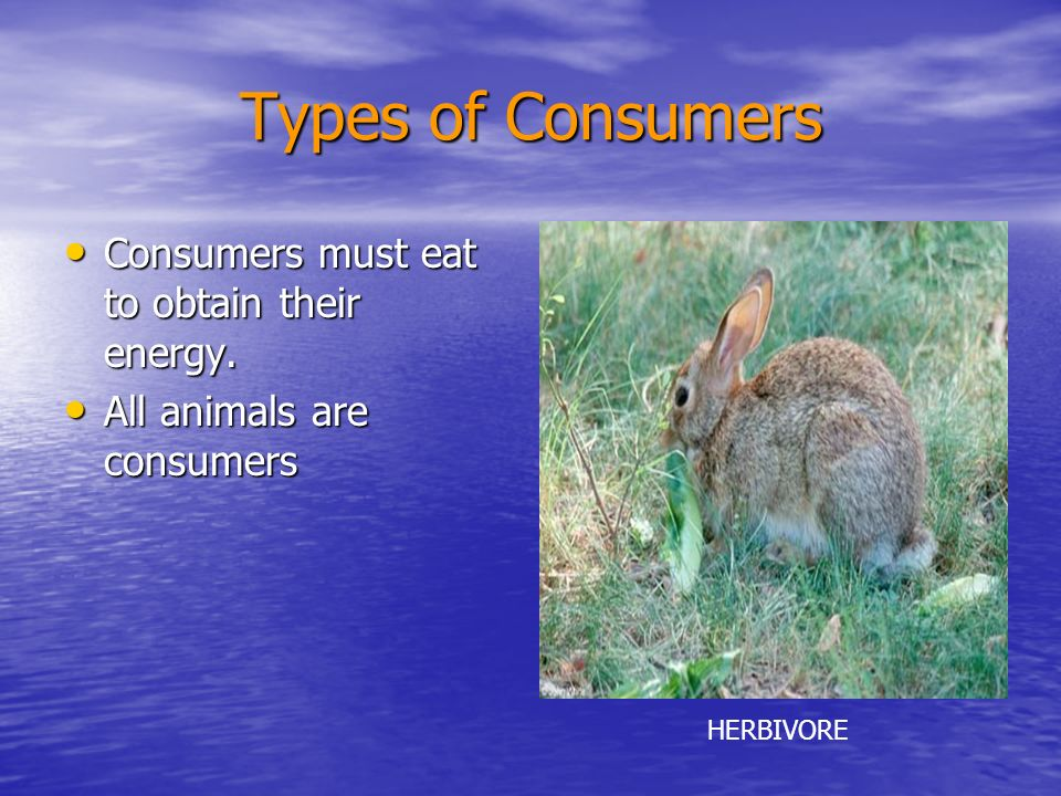 Types of Consumers Consumers must eat to obtain their energy.