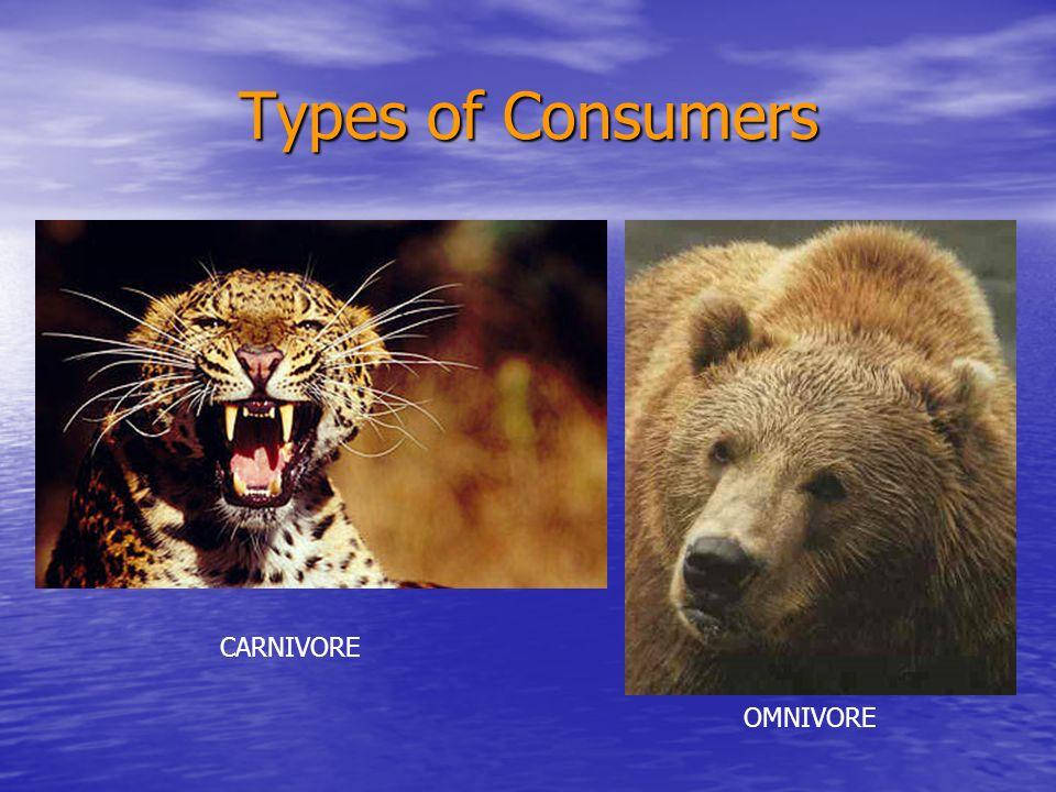 Types of Consumers CARNIVORE OMNIVORE