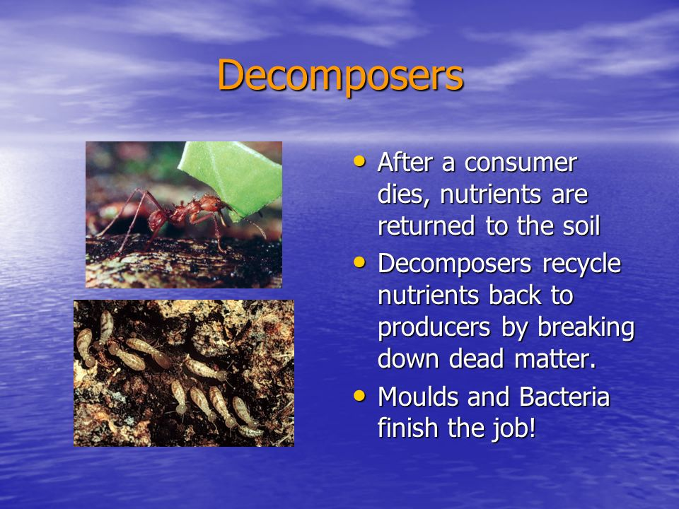 Decomposers After a consumer dies, nutrients are returned to the soil