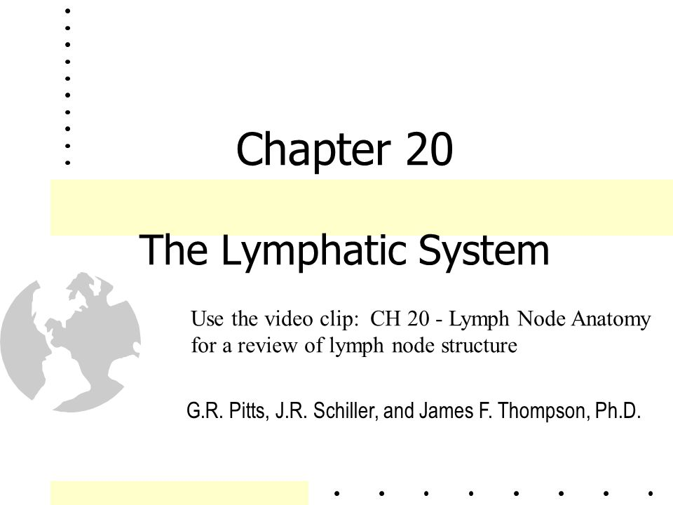 Chapter 20 The Lymphatic System