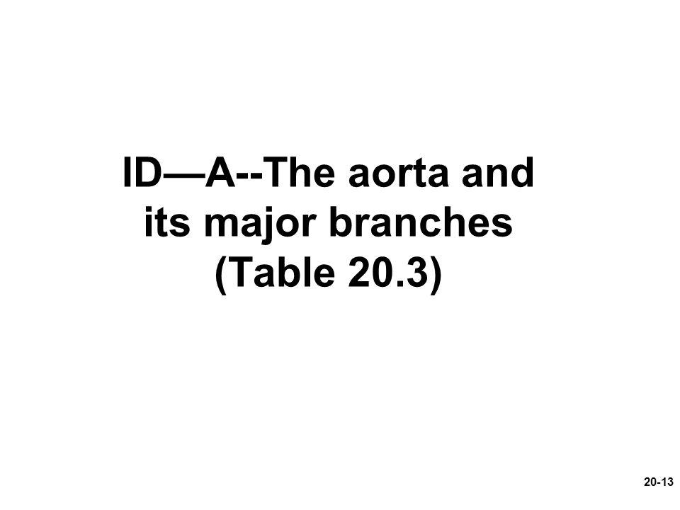 ID—A--The aorta and its major branches (Table 20.3)