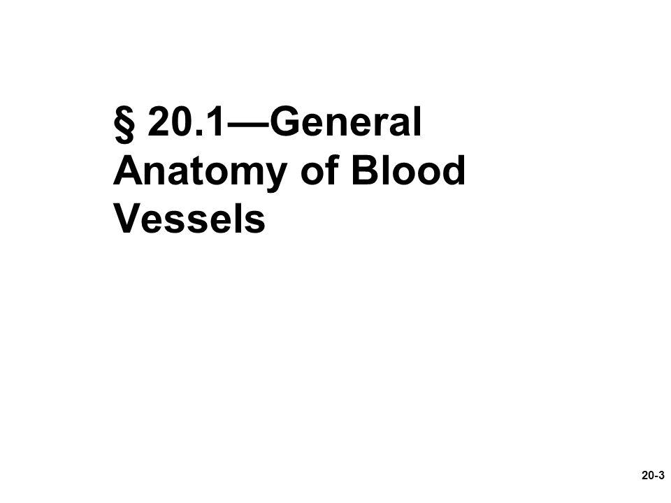 § 20.1—General Anatomy of Blood Vessels