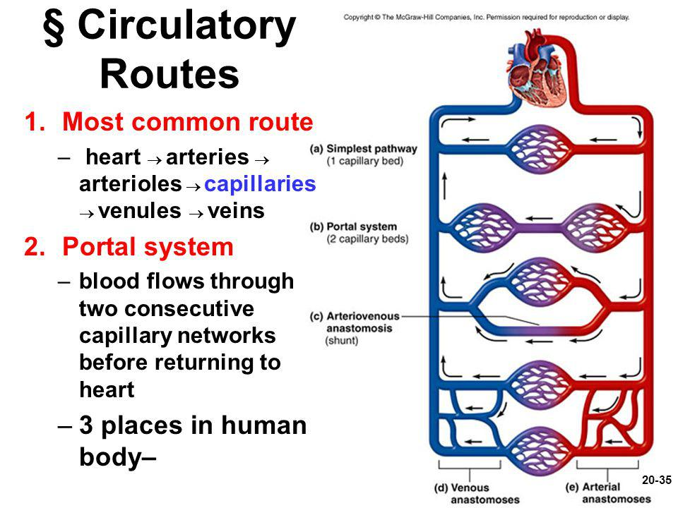§ Circulatory Routes Most common route Portal system