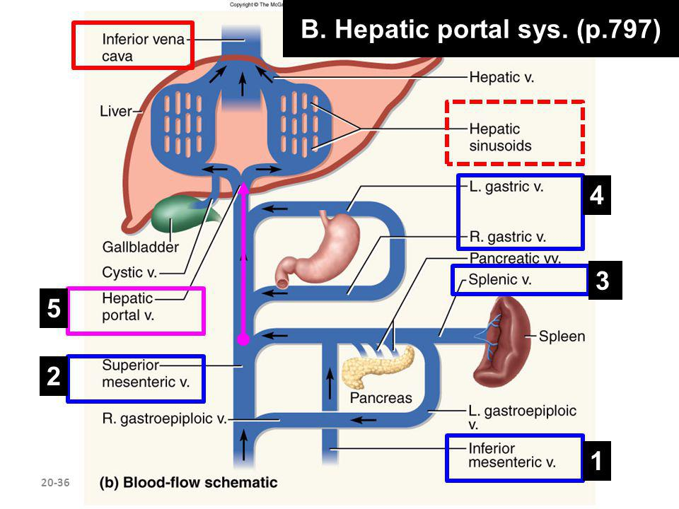 B. Hepatic portal sys. (p.797)