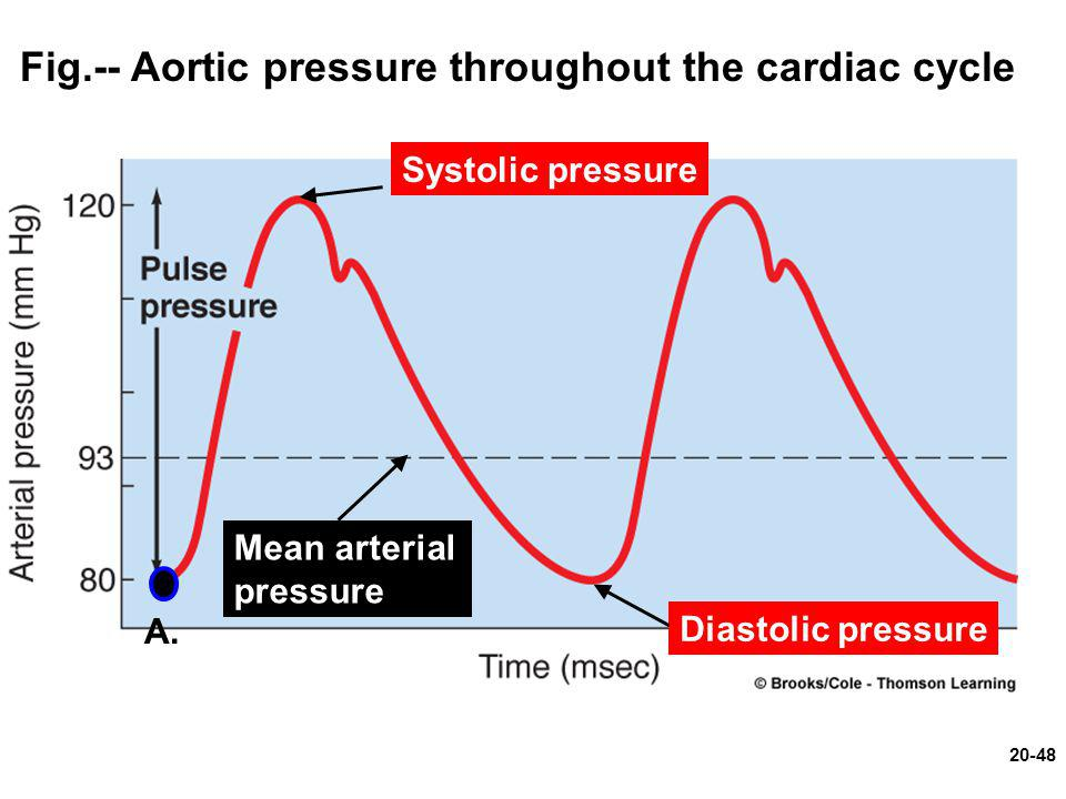 Fig.-- Aortic pressure throughout the cardiac cycle