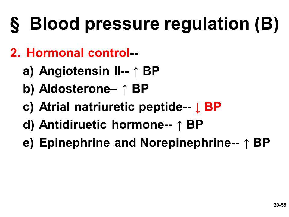 § Blood pressure regulation (B)