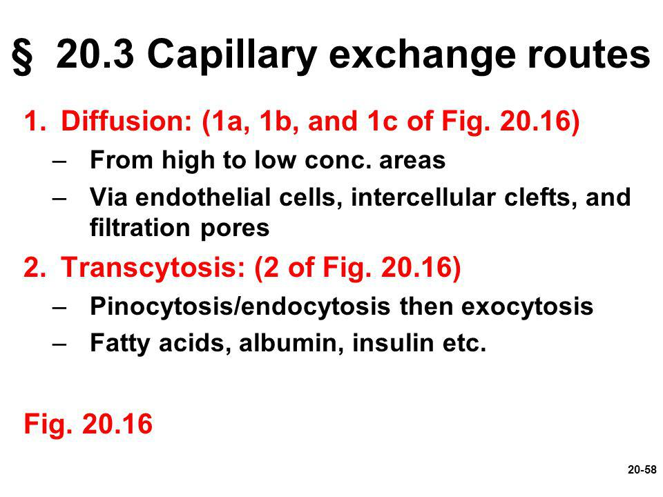 § 20.3 Capillary exchange routes