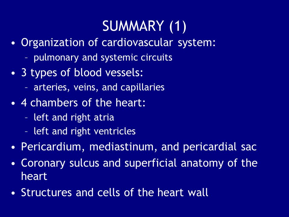 SUMMARY (1) Organization of cardiovascular system: