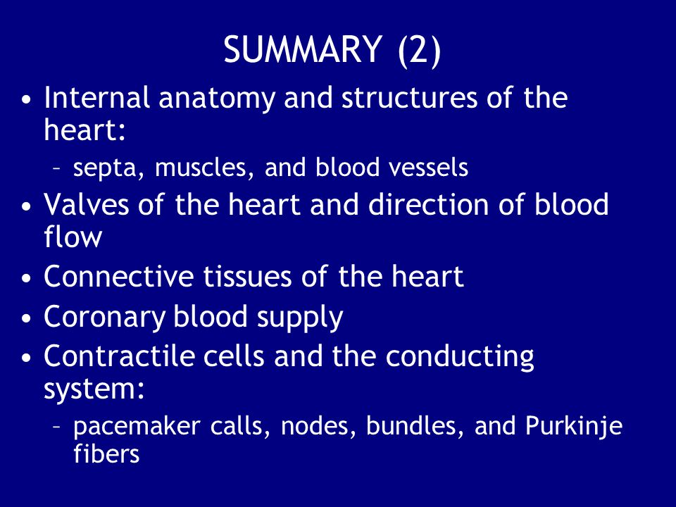 SUMMARY (2) Internal anatomy and structures of the heart: