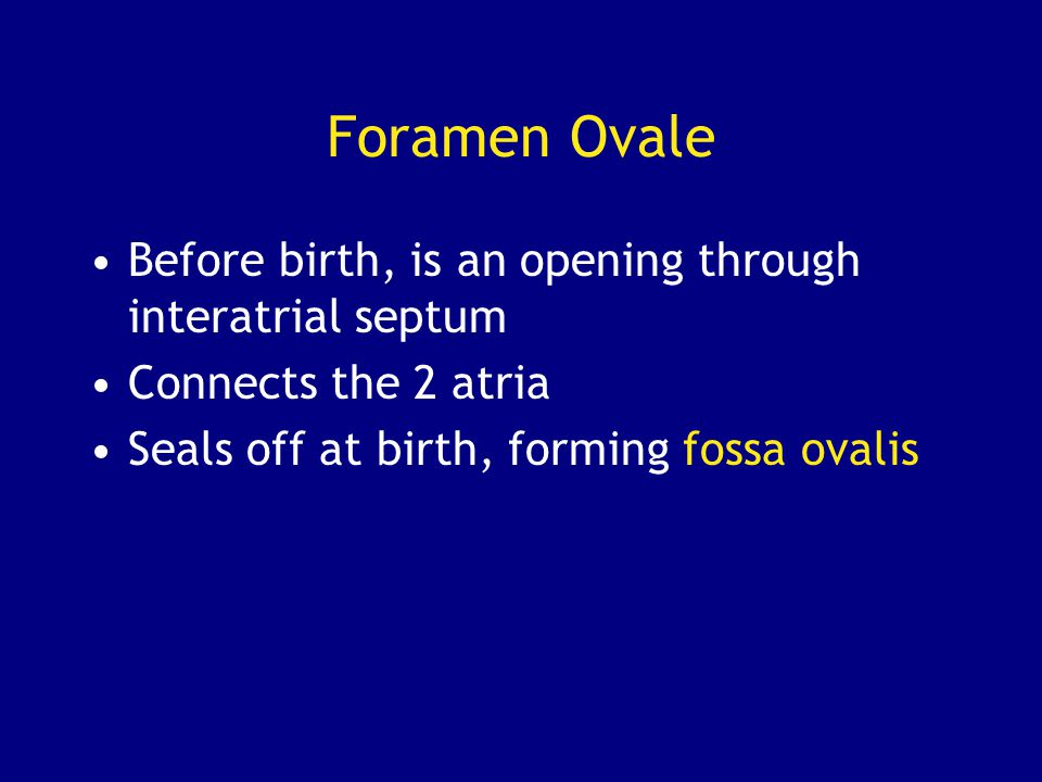 Foramen Ovale Before birth, is an opening through interatrial septum