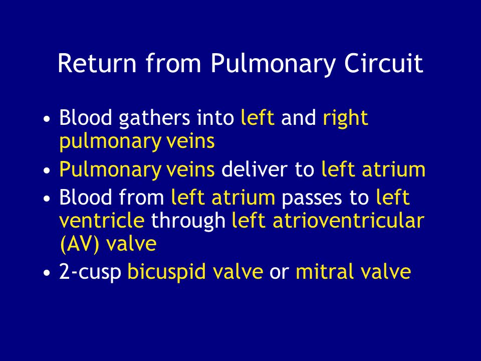 Return from Pulmonary Circuit