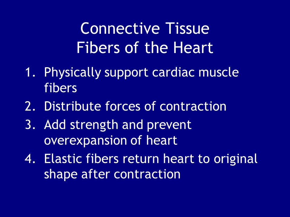 Connective Tissue Fibers of the Heart