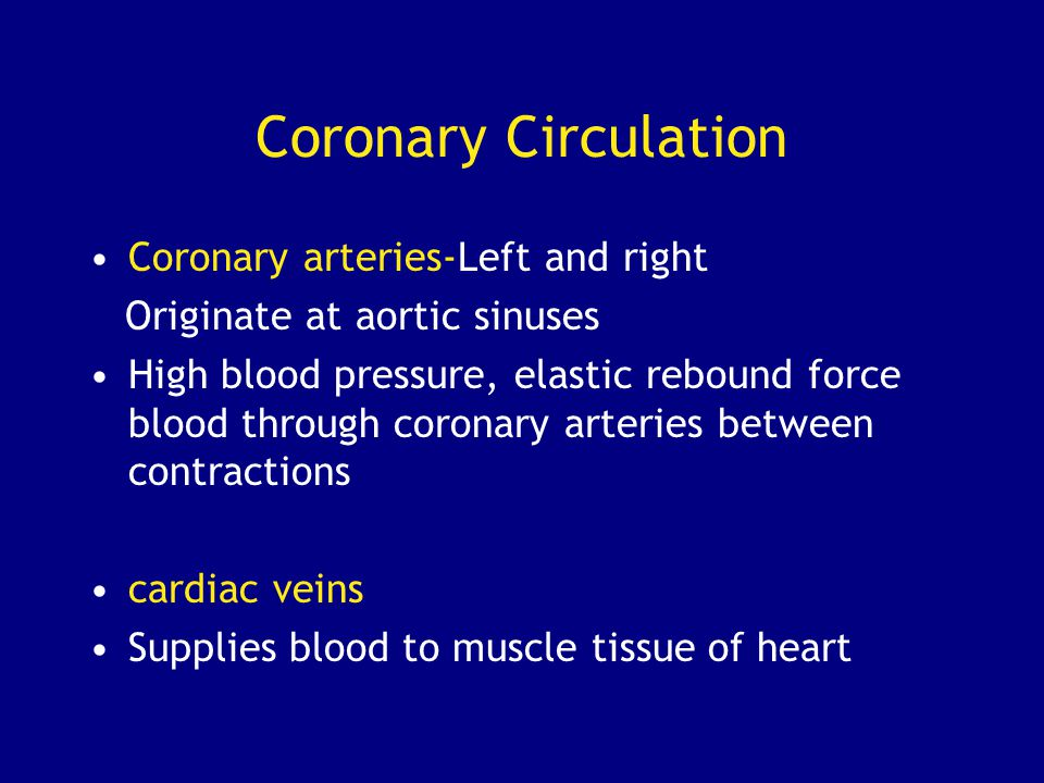Coronary Circulation Coronary arteries-Left and right