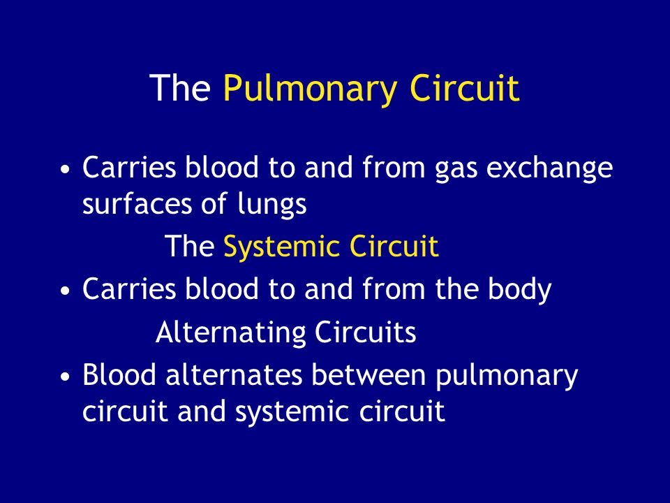 The Pulmonary Circuit Carries blood to and from gas exchange surfaces of lungs. The Systemic Circuit.