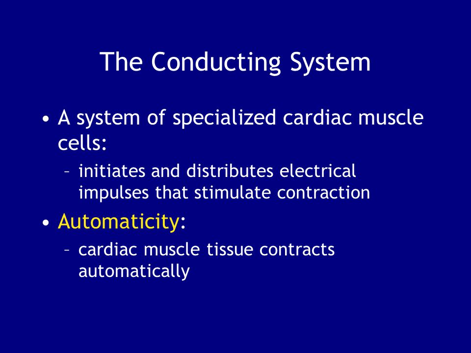 The Conducting System A system of specialized cardiac muscle cells: