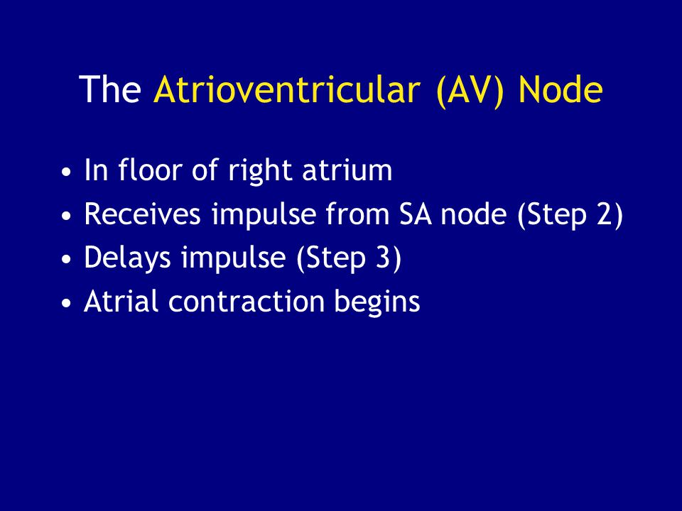 The Atrioventricular (AV) Node