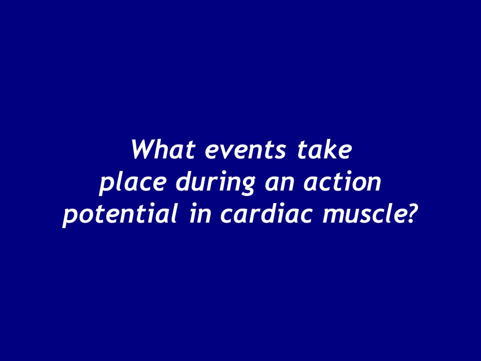 What events take place during an action potential in cardiac muscle