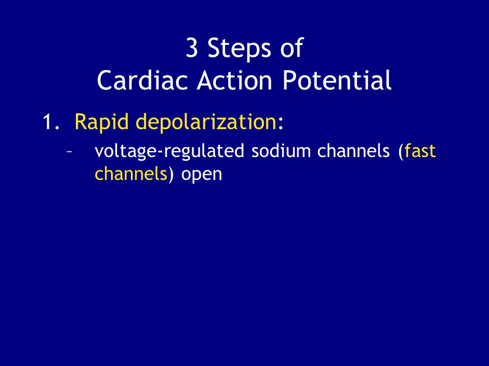 3 Steps of Cardiac Action Potential