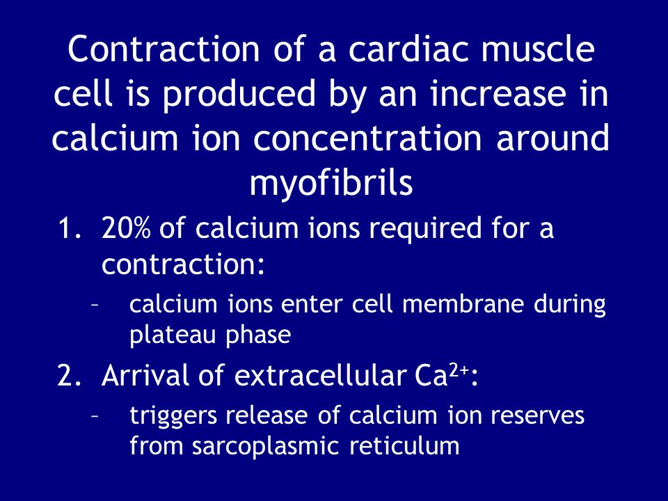Contraction of a cardiac muscle cell is produced by an increase in calcium ion concentration around myofibrils