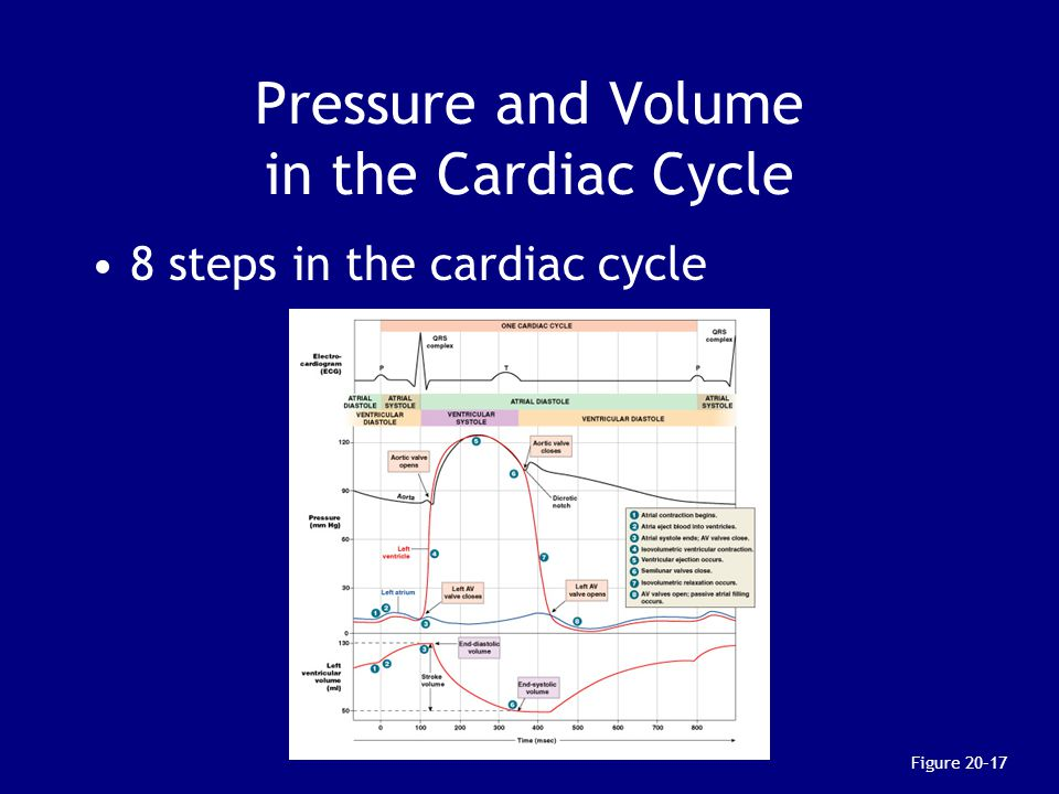 Pressure and Volume in the Cardiac Cycle